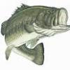 bass_1