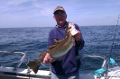 Tonys fish_1